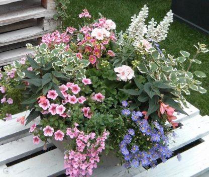Beet und Balkonblumen Spezialdünger