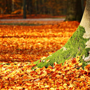 Rasenwissen Kategorie Rasenpflege im Herbst