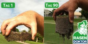 Voher-nachher Bild bei Verwendung von effektiven Mikroorganismen in der Rasenpflege