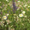 Rasendoktor Wildblumenmischung